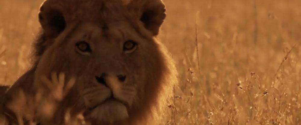 Wildlife in Africa / re-score